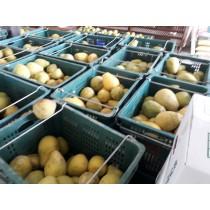 【嬅樺小舖】 MIT台灣出產  無毒的正宗40年麻豆文旦《10~20斤裝》
